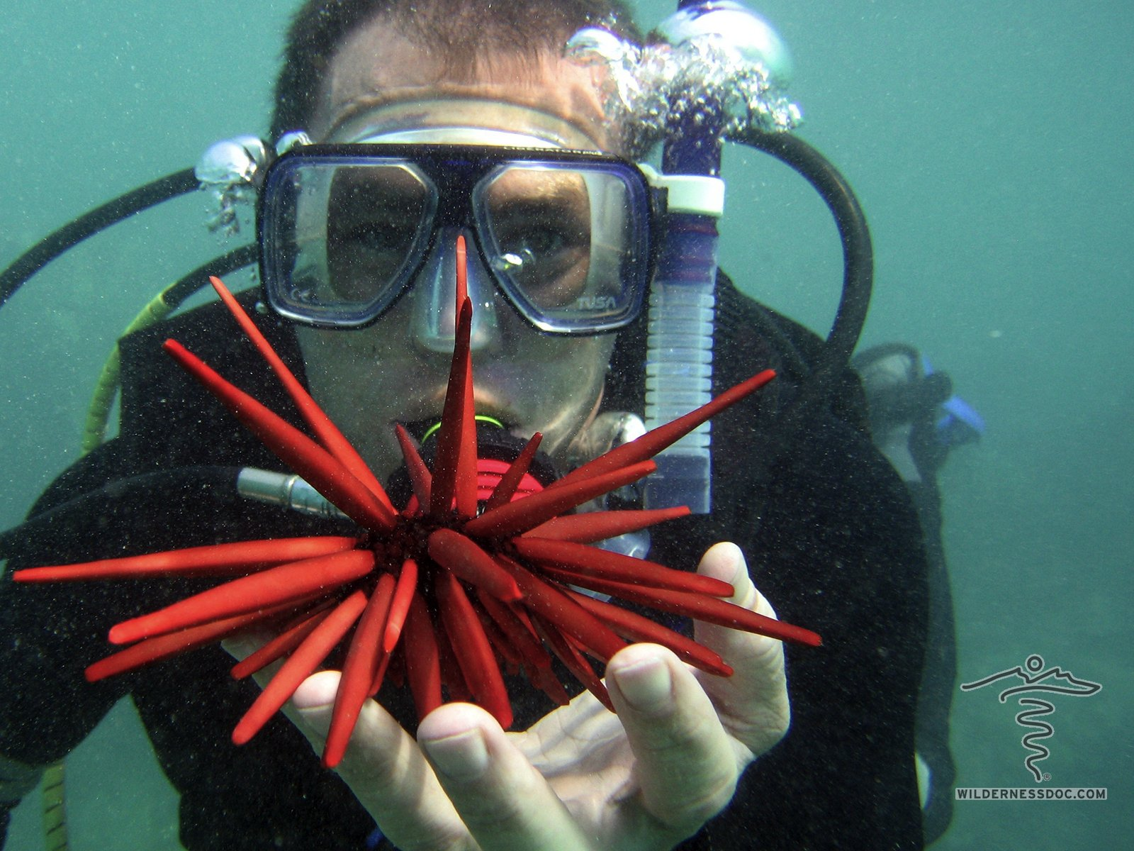 Smith Maui Diving_1600x